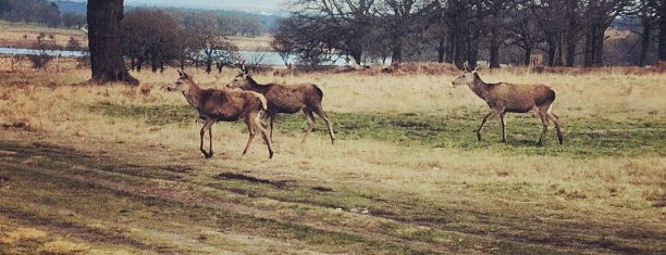 Richmond Park is one of London - All you need to see!.