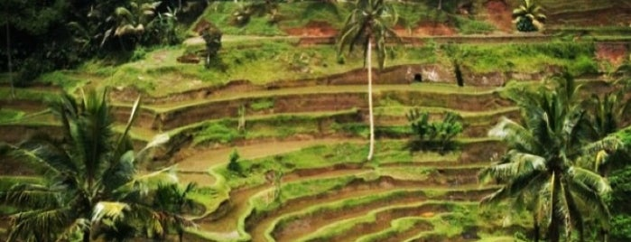 Tegallalang Rice Terraces is one of Bali.