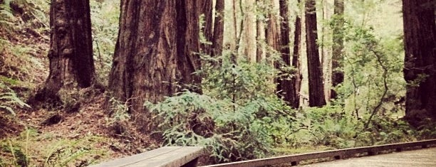 Muir Woods National Monument is one of Day Trips.