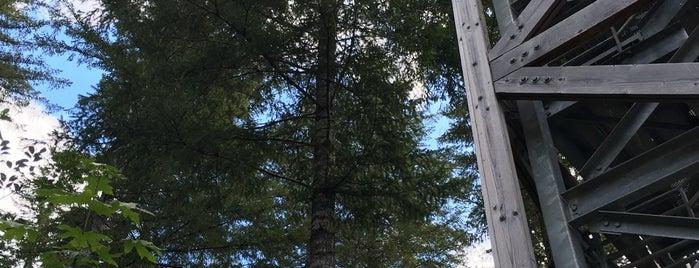 Tillamook State Forest is one of Lieux sauvegardés par Dat.