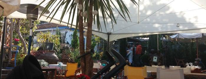 Cafe Botanic is one of Orte, die Özlem gefallen.