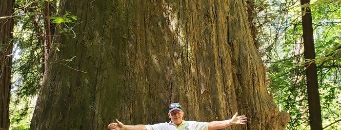 Avenue of Giants is one of RV vacation.