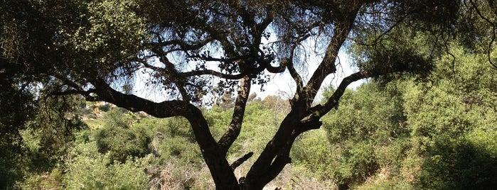 Tecolote Canyon Natural Park and Nature Center is one of Tempat yang Disukai Tara.