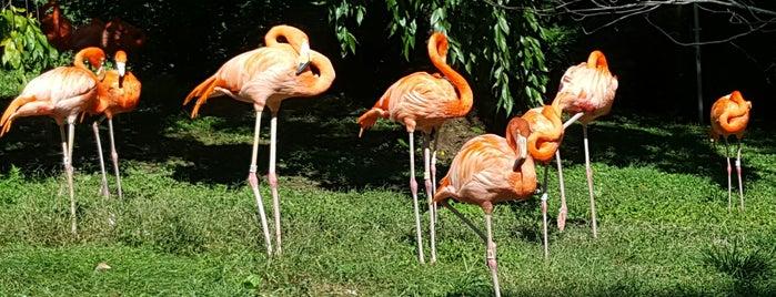 Flamingos is one of Lugares favoritos de Monica.