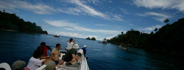 Raja Ampat island is one of Hehe.