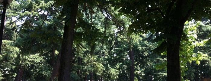 Parco pubblico is one of Locais curtidos por Mik.