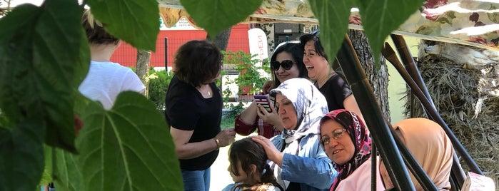 Palmiye Cafe Kır Kahvaltı Restorant is one of Posti che sono piaciuti a BuRcak.