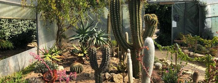 Jardin exotique de Roscoff is one of Locais curtidos por Simon.