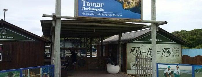 Projeto Tamar is one of Fabiana 님이 좋아한 장소.
