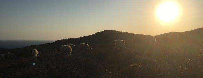 Kourtaliotis Gorge (Preveli Gorge) is one of Crete.