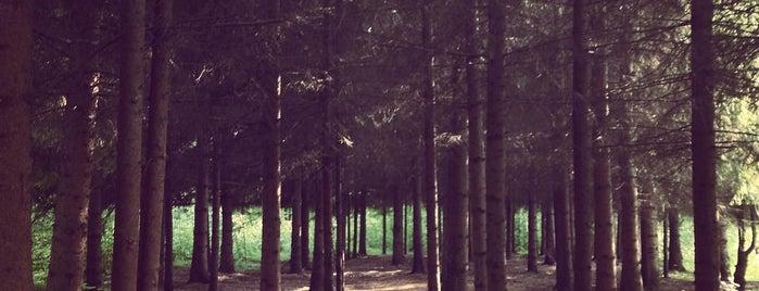 Ботаническое лесничество (Ботсад) is one of Gespeicherte Orte von Garmider.