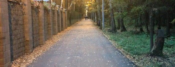 Подушкинский лес is one of Dmitryさんのお気に入りスポット.