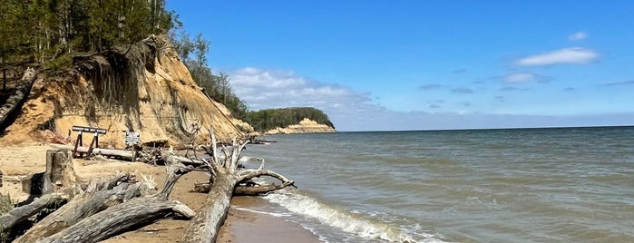 Calvert Cliffs State Park is one of Rachel'in Beğendiği Mekanlar.