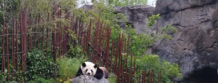 Panda Paviljoen is one of Lieux qui ont plu à Nathalie.