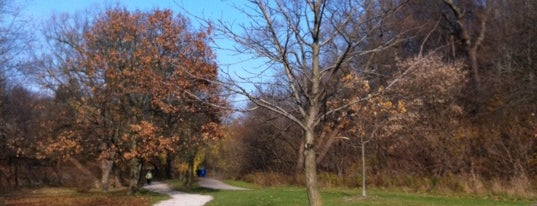 Kingsway Park is one of Toronto Neighbourhoods.