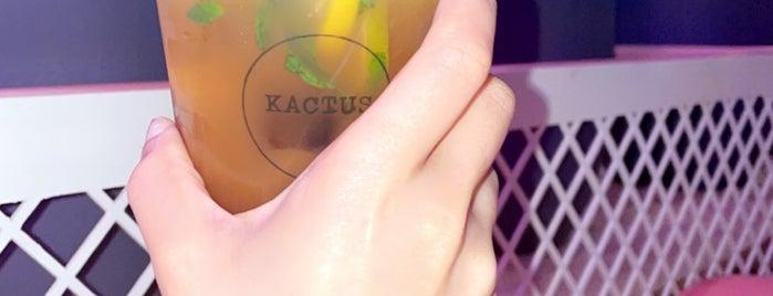 Kactus كاكتس is one of Posti salvati di Amal.