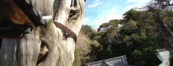 白濱神社 (伊古奈比咩命神社) is one of Shimoda.