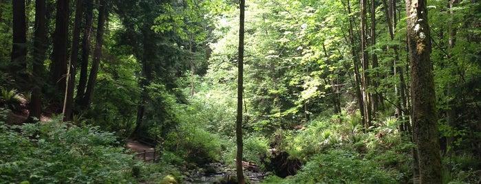 Mahon Park is one of Lieux sauvegardés par Cate.