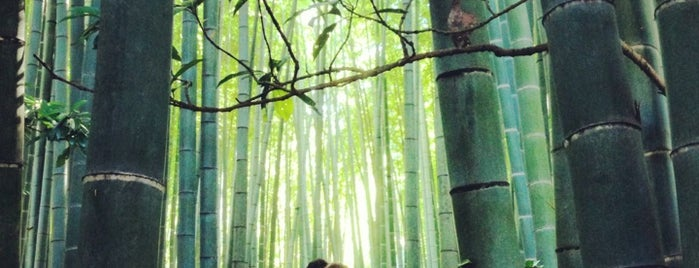 Hōkokuji Temple is one of Katsu : понравившиеся места.