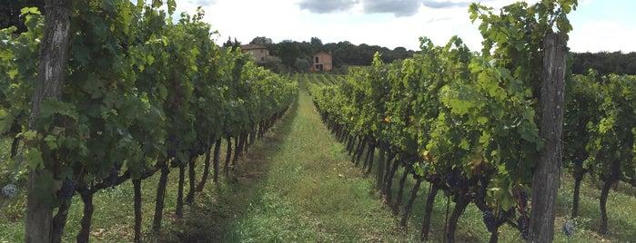 Castello di Bossi is one of Chianti Classico Producers.
