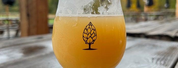 Beer Tree Brew Co. is one of Breweries.