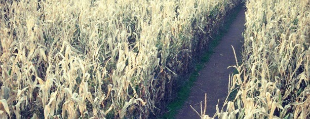 The Amazing Maize Maze is one of Arts / Music / Science / History venues.