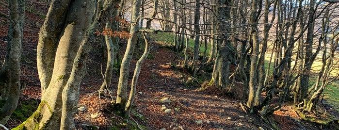 Parco Nazionale Del Gran Sasso E Monti Della Laga is one of A Guide to Abruzzo.
