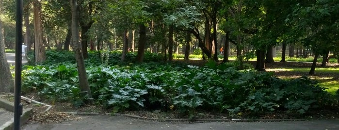 Corriendo en Chapultepec is one of Orte, die Rich gefallen.