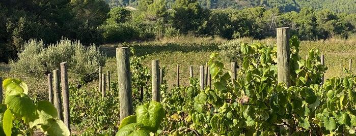 Raventós i Blanc is one of Wine World.