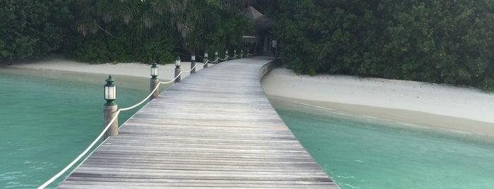 Ayada Maldives is one of glsh4574 님이 저장한 장소.