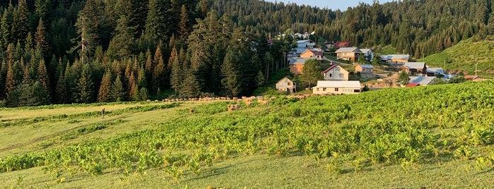 Çiğdem Yaylası (rakım 2118 m) is one of Lugares favoritos de The.