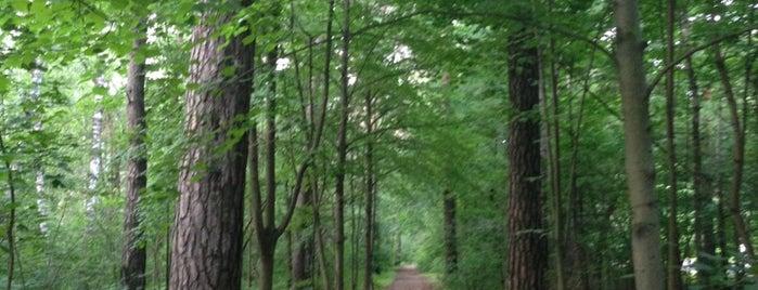 Жуковский городской парк культуры и отдыха is one of The Long Walk.