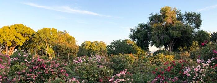 San Jose Heritage Rose Garden is one of Vilas : понравившиеся места.