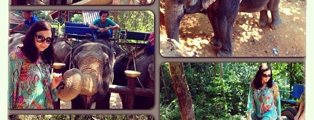 Island Safari Elephant Camp is one of Joshさんのお気に入りスポット.