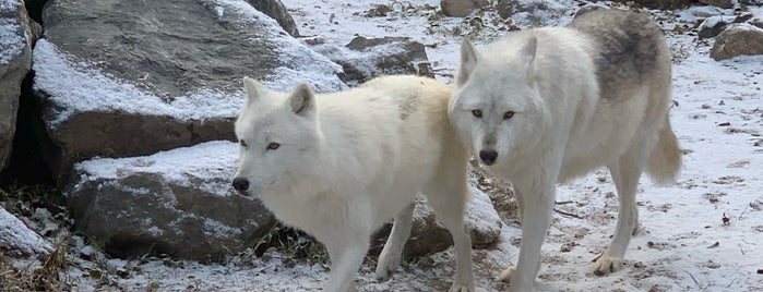 International Wolf Center is one of Lieux sauvegardés par Chad.