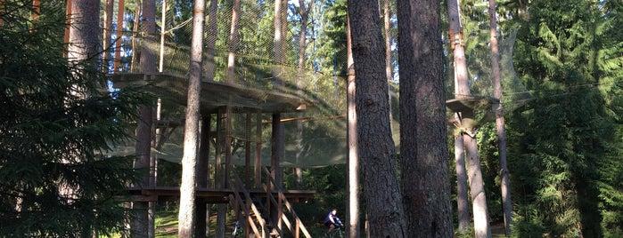 Веревочный парк Охта Парк is one of Locais curtidos por Vlada.