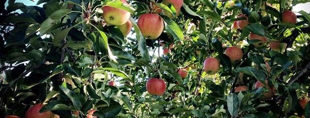 Beak And Skiff Apple Farm is one of Off-Campus Activities.