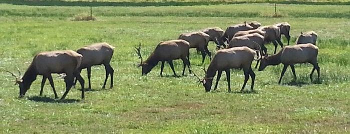 Dean Creek Elk Reserve is one of Portland (there's always tomorrow).