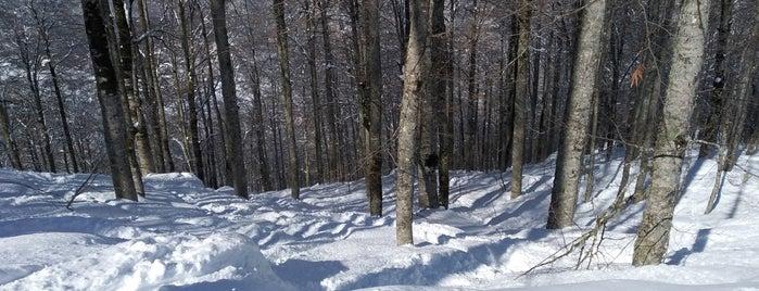 "Тропа ""Реликтовый лес"" is one of สถานที่ที่ Stanislav ถูกใจ."