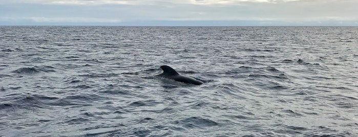 Whale watching is one of Tenerife go to places.