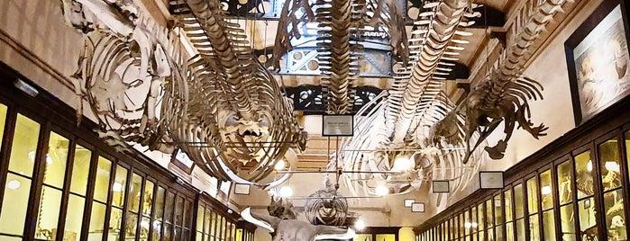 Museo de La Plata is one of #blogtripLP.