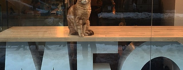 Meow Parlour is one of NYC: Fast Eats & Drinks, Food Shops, Cafés.