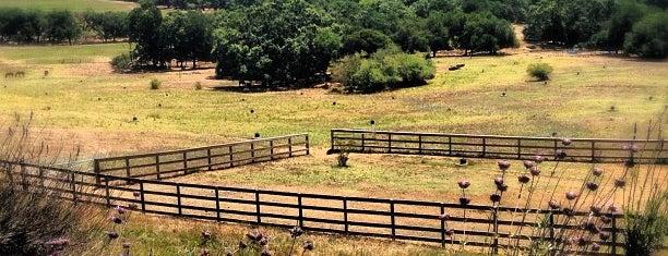 Shone Farm is one of Tempat yang Disukai Tammy.
