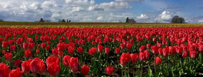 Wooden Shoe Tulip Farm is one of Jill'in Beğendiği Mekanlar.
