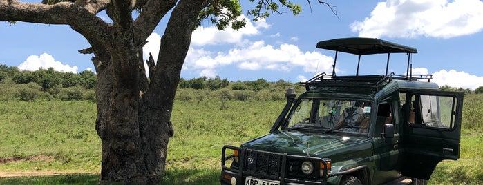 Maasai Mara National Reserve is one of Aaron'un Beğendiği Mekanlar.