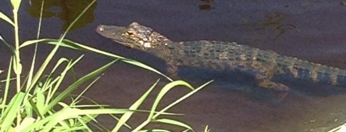 Gators Riverside Grille is one of Dinner.
