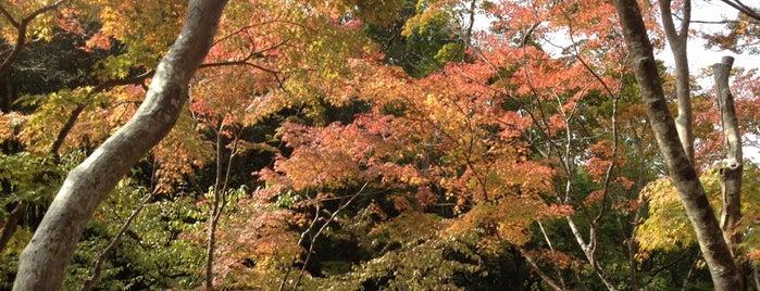 瑞宝寺公園 is one of Kansai Trip.