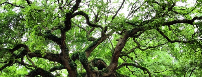 Angel Oak Tree is one of Mary 님이 저장한 장소.