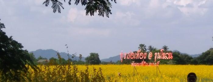 ทุ่งปอเทือง is one of ลพบุรี สระบุรี.