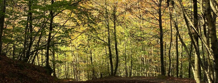 Polenezköy Tabiat Parkı is one of Ça.